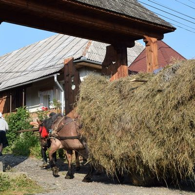bringing hay home