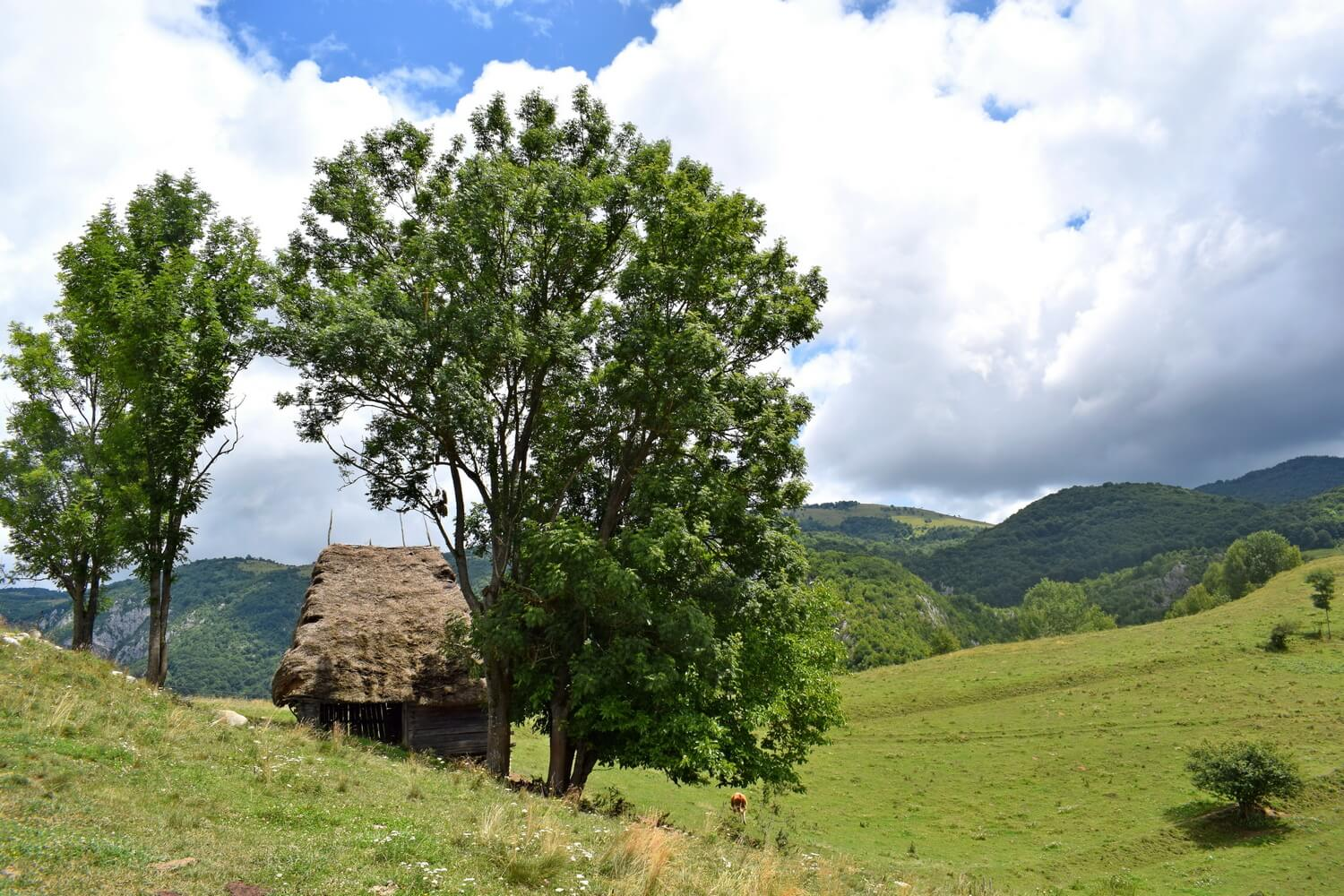 cattle shelter in Apuseni Mountains