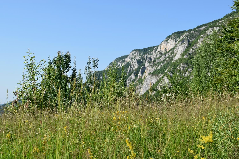 Apuseni Mountains biodiversity