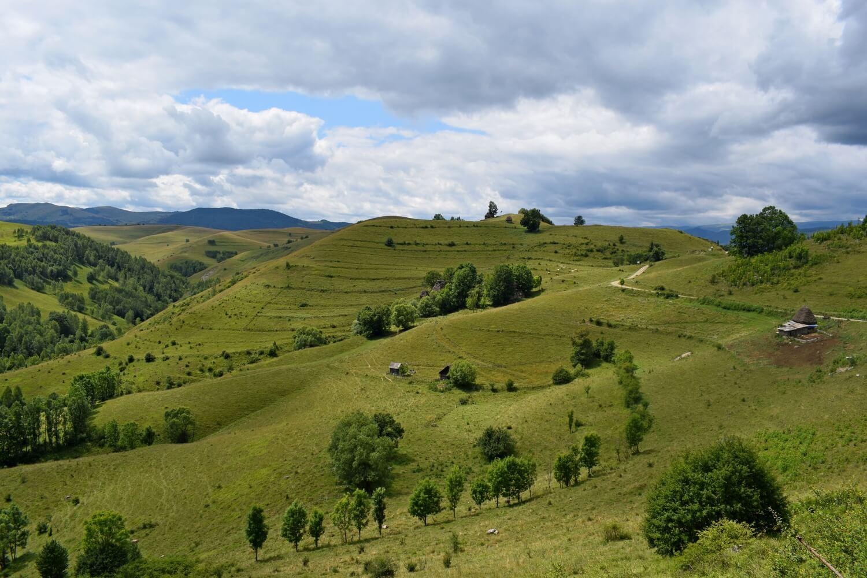green pasture in Apuseni
